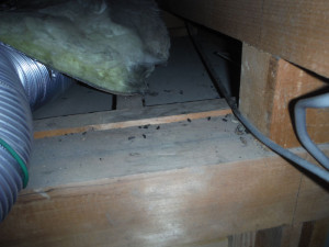 天井裏のネズミ糞尿